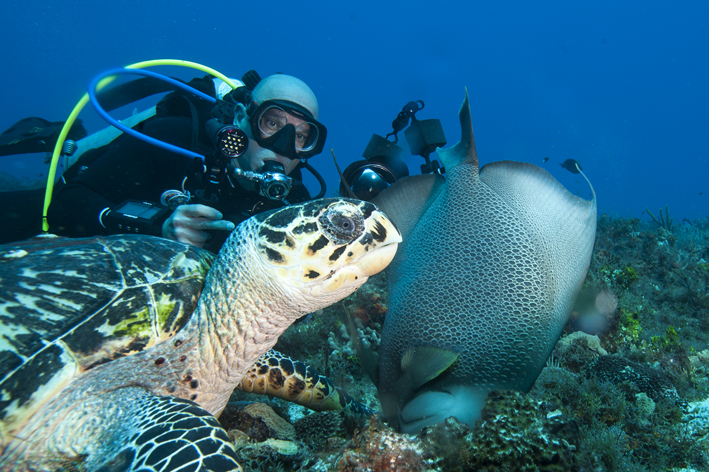 Green-Turtle-and-me-Cozumel